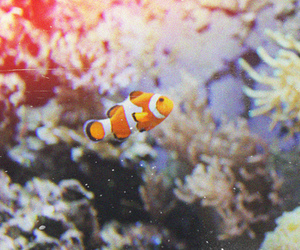nemo and vintage image