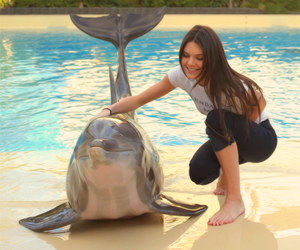 dolphin, summer, and kendall jenner image