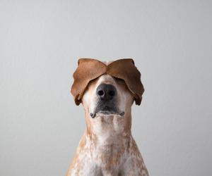 dog, animal, and ear image