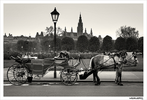 carriage, horse, and Strauss image