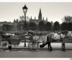 carriage, city, and vienna image