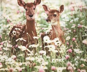 flowers, animal, and deer image