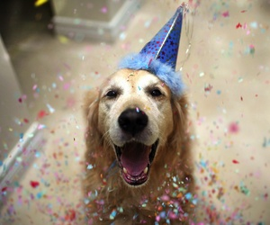 dog, happy, and birthday image