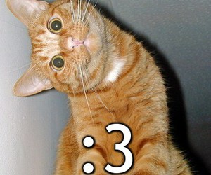 cat, :3, and funny image