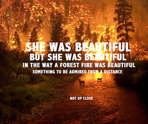 fire, beautiful, and forest image