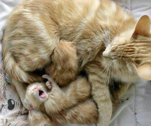 cat & kittens image
