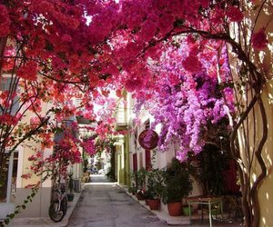 flowers, pink, and Greece image