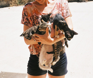 cat, girl, and kitten image
