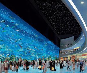 Dubai, amazing, and fish image