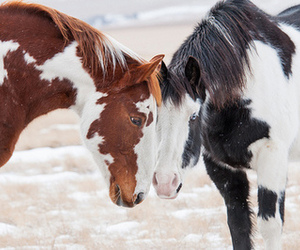 black, brown, and horses image