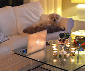 dog, apple, and candle image