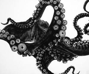 octopus, black and white, and animal image