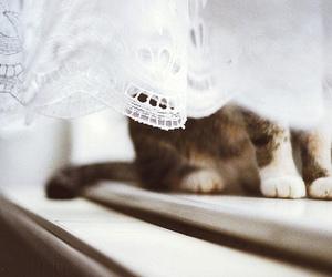 cat, kitten, and window image