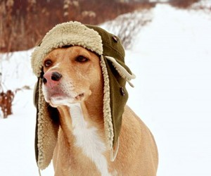 dog, hat, and snow image