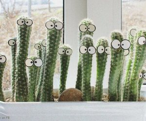 cactus, do, and window image