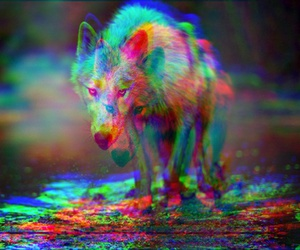 wolf, 3d, and animal image