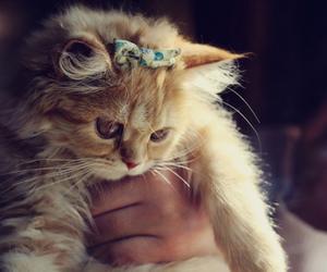 cat, ribbon, and cute image