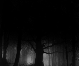 black and white, forest, and photography image