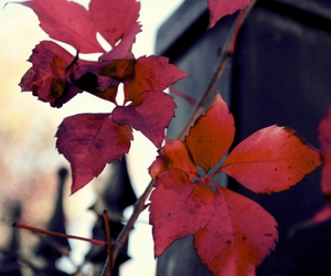 autumn, branch, and cute image