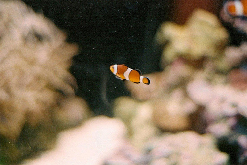 fish, nemo, and vintage image