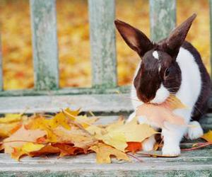 autumn, rabbit, and cute image