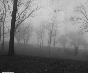 black and white, forest, and spooky image
