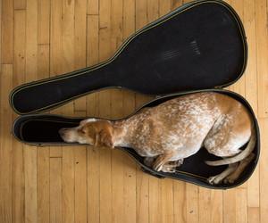 dog, guitar, and animal image