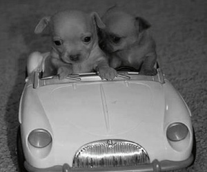 dog, puppy, and car image