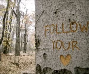 heart, tree, and follow image