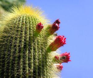 cactus, nature, and sun image