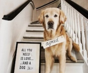 dog, animal, and quotes image