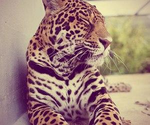 animal, dot, and girly image