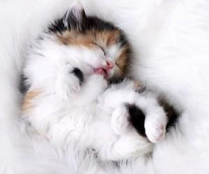 cute cat kitten image
