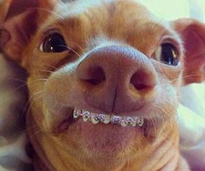 dog, funny, and smile image