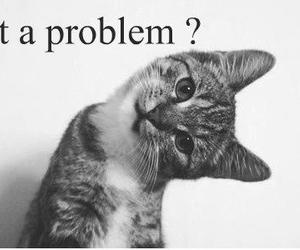 problem, cat, and funny image