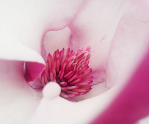 auckland, flower, and pink image