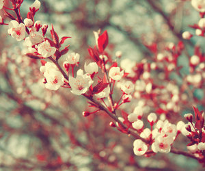 spring, blossoms, and flowers image