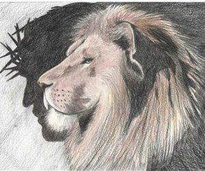 animal, bible, and Christ image