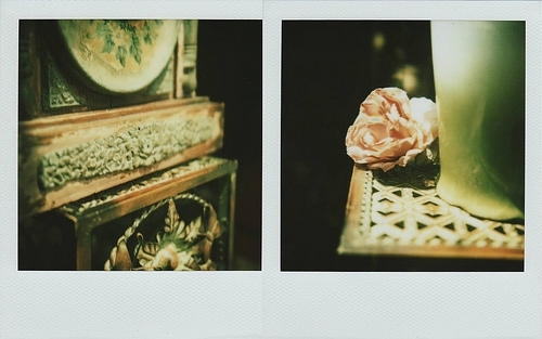 polaroid and rose image