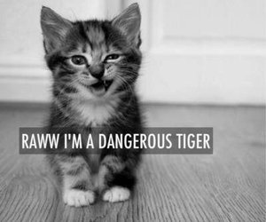 cat, cute, and tiger image