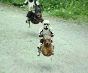 dog, star wars, and funny image
