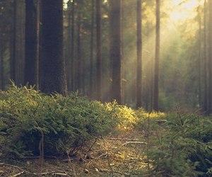 amazing and nature image