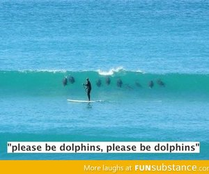 dolphin, funny, and lol image