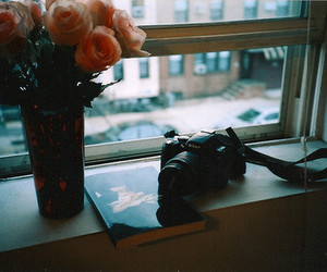 photography, flowers, and vintage image