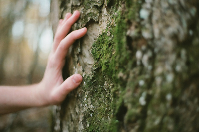 tree, aesthetic, and hand image