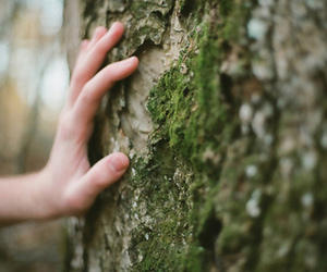 tree, hand, and nature image