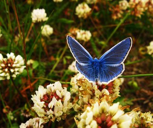 autumn, blue, and butterfly image