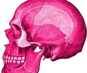 skull, pink, and smile image