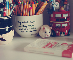 cute, pen, and book image