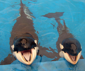 animal, cute, and dolphin image
